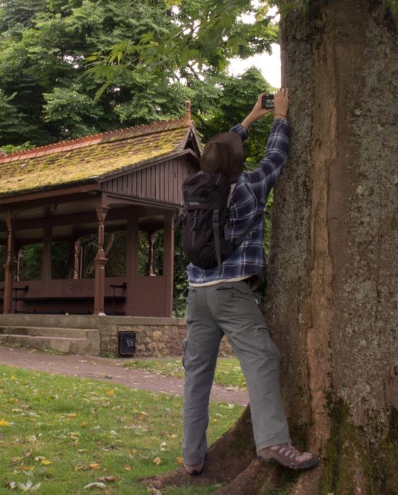 lean-on-trees